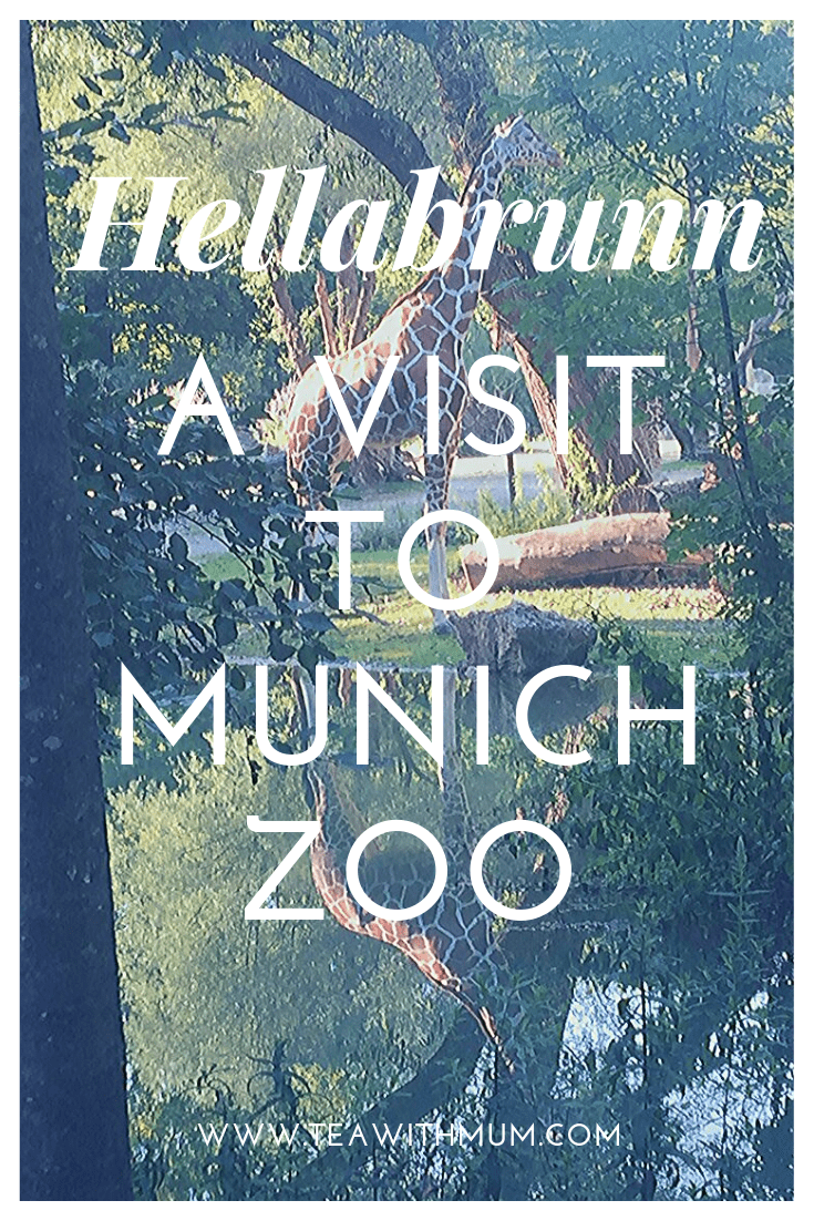 Hellabrunn: A visit to Munich zoo; things to do in Munich with (or without) kids; giraffe and reflection from a recent visit to Hellabrunn Tierpark, the Munich zoo