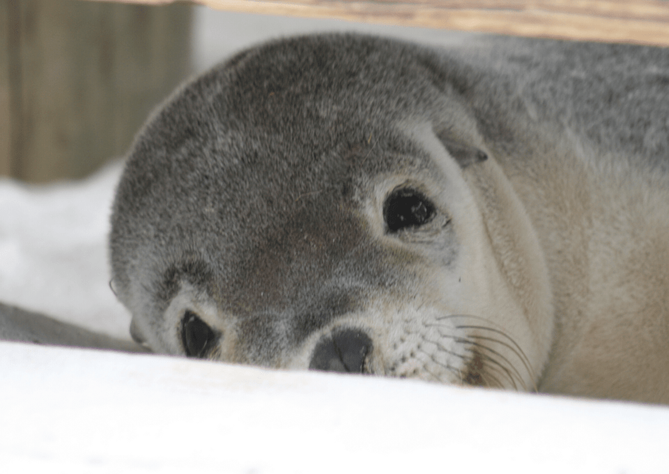 Isn't this Australian sea lion gorgeous? We hope we will have some great animal close ups when visiting Kangaroo Island.