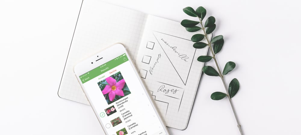 تطبيقPlantSnap للتعرّفعلى الزهور والأشجار والنباتات عبر التقاط صورة لها