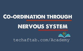 Co-ordination Through Nervous system