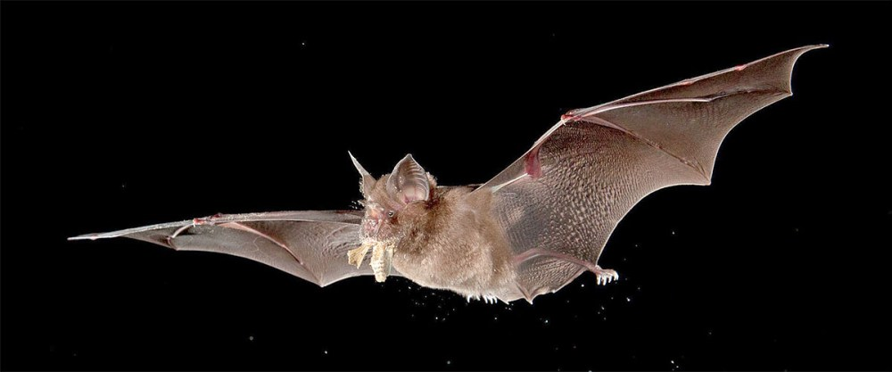 Bat most likely responsible for Wuhan coronavirus, not snakes