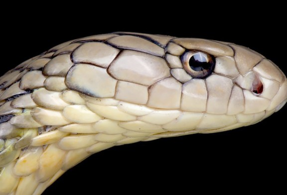 Why Snakes Are Not Source Of Wuhan Coronavirus!