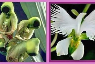 Flower of the Holy Spirit Transforms From Saint To Dove?