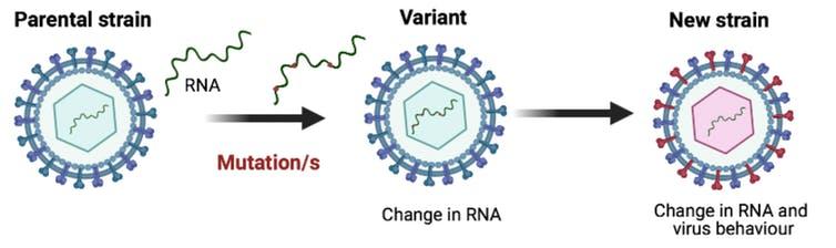 Virus strain vs variant