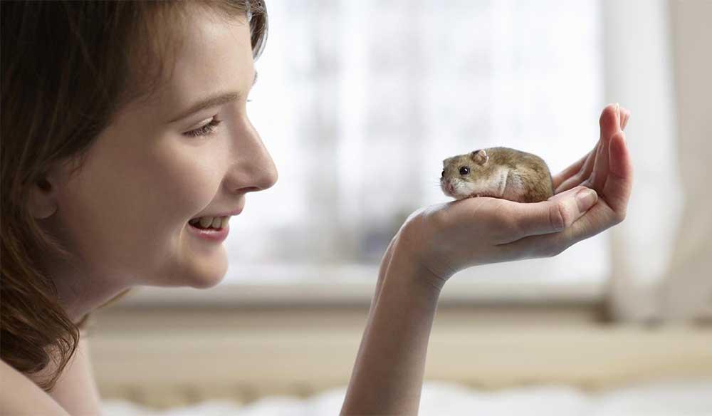 Human and hamster