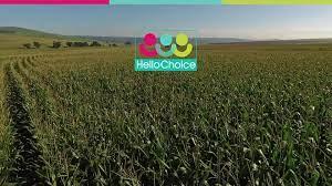 HelloChoice