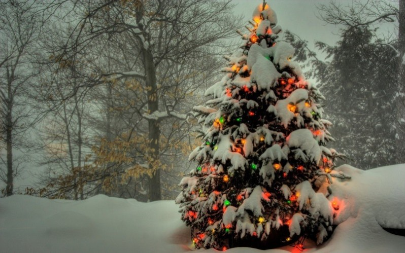 Snowy Christmas Tree with Lights Wallpaper