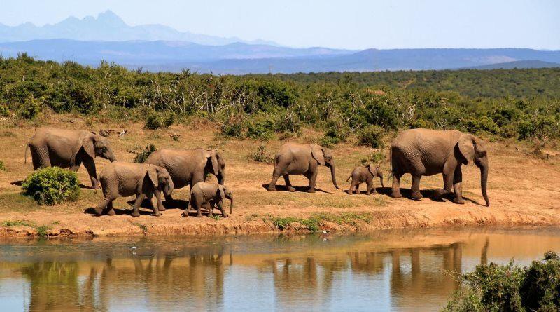 11 elephants walking beside body of water during daytime