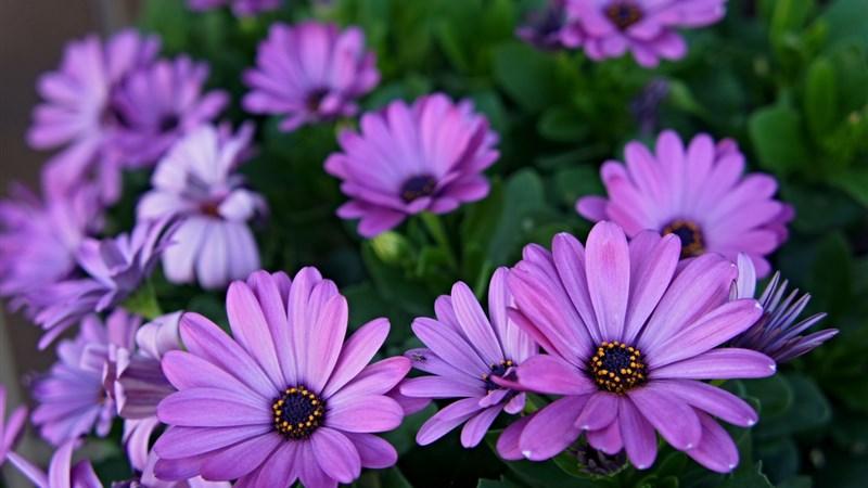 18 spring flower plant