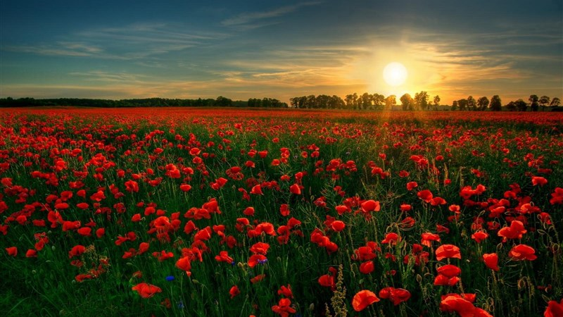 25 red flower garden
