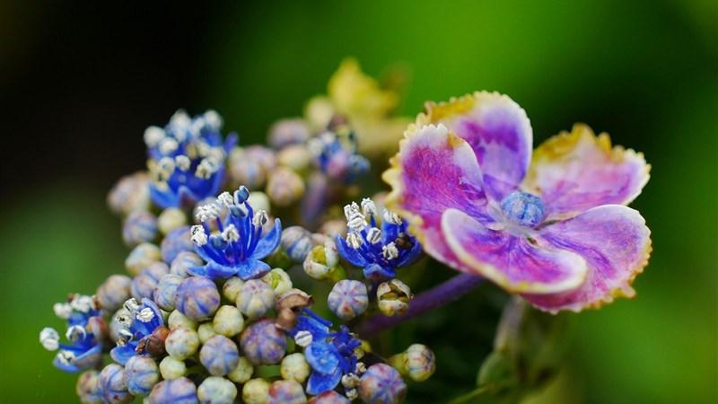 44 flower plant petals spot