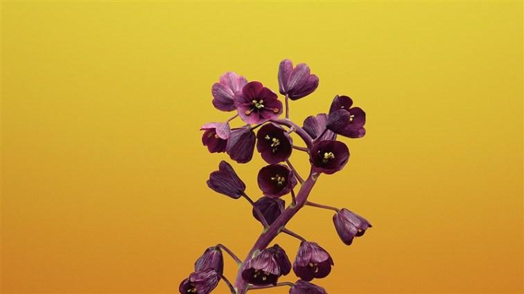 56 flower illustration art wallpaper