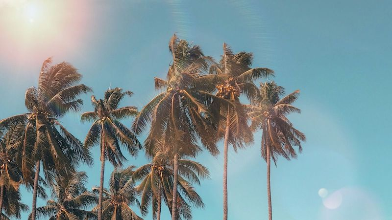 Palm Trees under Blue Cloudy Sky Summer Wallpaper