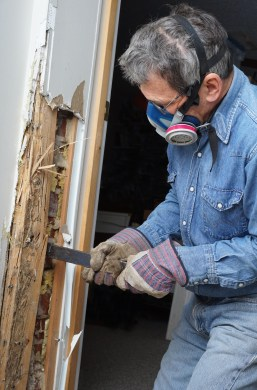 inspecting termite on the wall - Techcon Inspection Services termite inspection Long Island NY