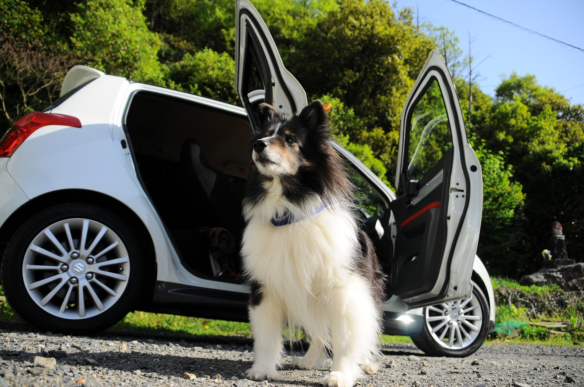Tips For Safe Car Travels With Your Dogs