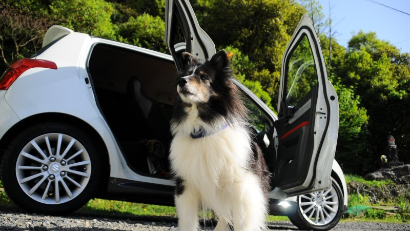 Safe Car Travels With Your Dogs