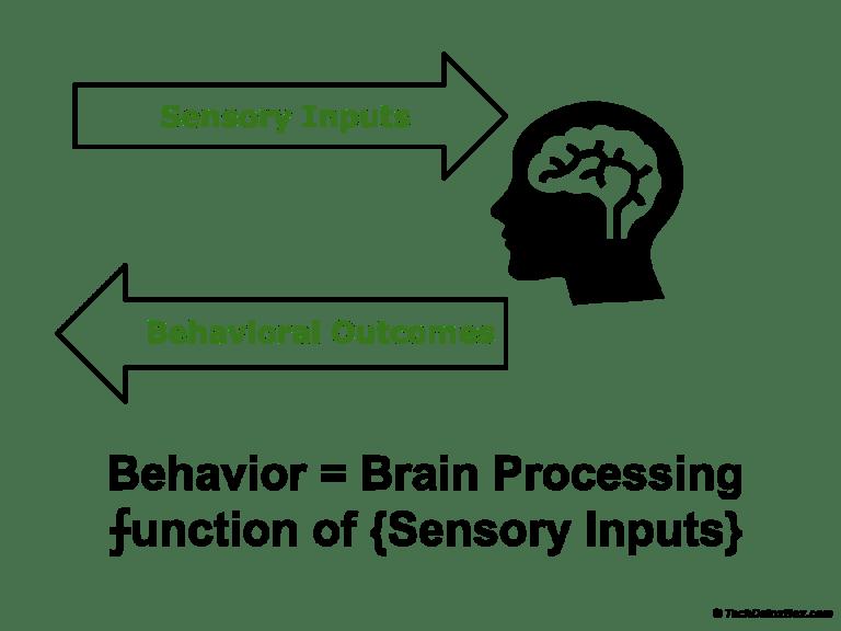 Brain processing of sensory inputs techdetoxbox.com
