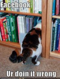 facebook-library-cat.jpg