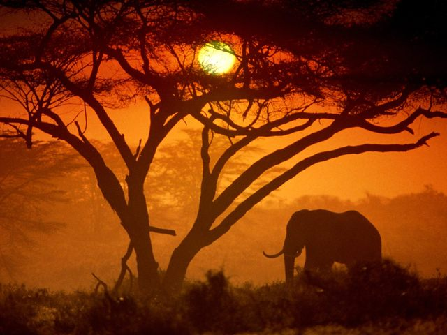 amboseli-national-park-kenya-picture.jpg