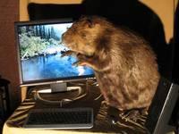 compu_beaver.jpg