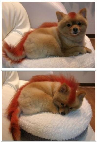 firefox-foxes.jpg
