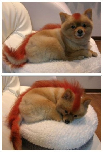 firefox-foxes.jpg