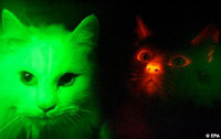 glowing-korean-cats.jpg