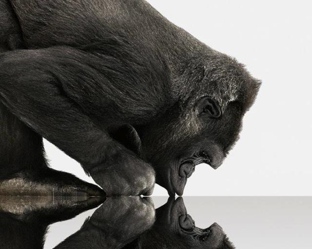 gorilla-glass.jpg