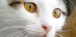 petclubukcat.jpg