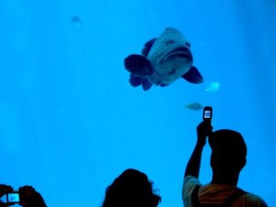 photo-sharing-fish.jpg