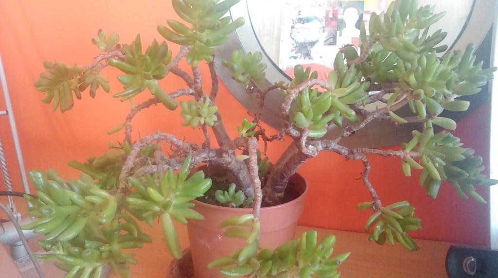 Indoor plant photo