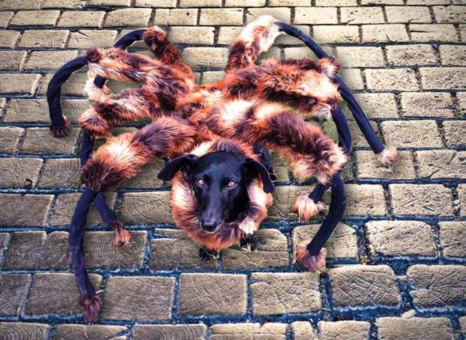 mutant-giant-spider-dog