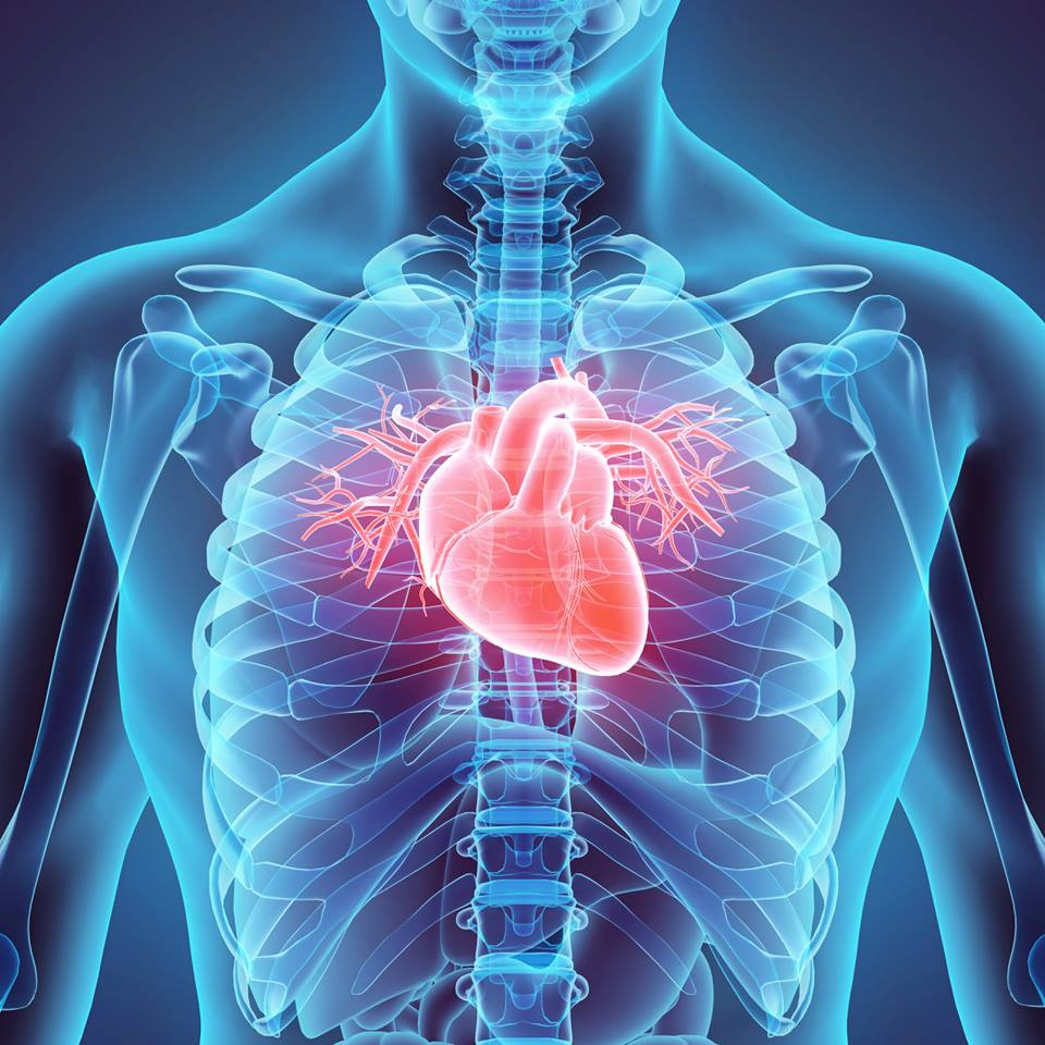 One Day We Could Actually Regenerate Human Hearts