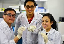 Photo caption: NTU Singapore scientists have found potential biomedical uses for collagen derived from fish scales which are usually discarded. From left: Associate Professor Andrew Tan, research fellow Dr Wang Jun Kit and Assistant Professor Cleo Choong.