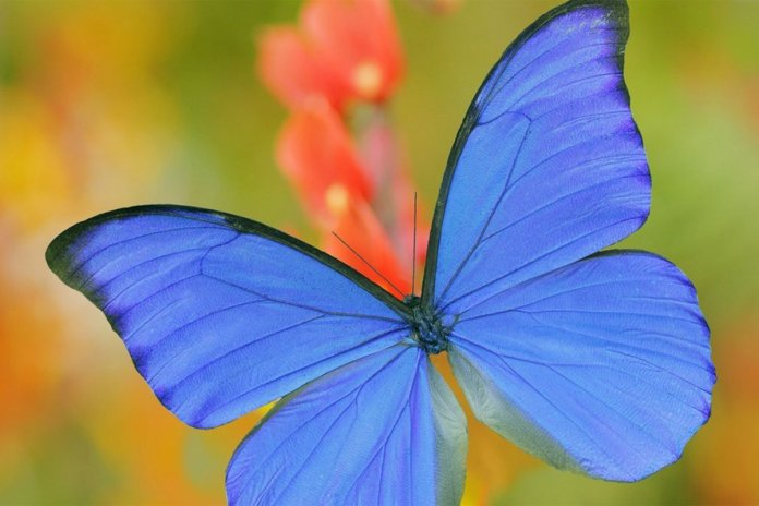 The Wyss Institute is developing a new type of coating for catalytic converters that, inspired by the nanoscale structure of a butterfly's wing, can dramatically reduce the cost and improve the performance of air-purification technologies, making them more accessible. Credit: Wyss Institute at Harvard University
