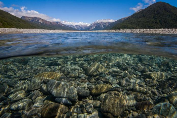 Reducing a river's size is likely to reduce its capacity to support predatory fish. Underwater view of the Waimakariri River, Canterbury. Photo credit: Angus McIntosh/University of Canterbury