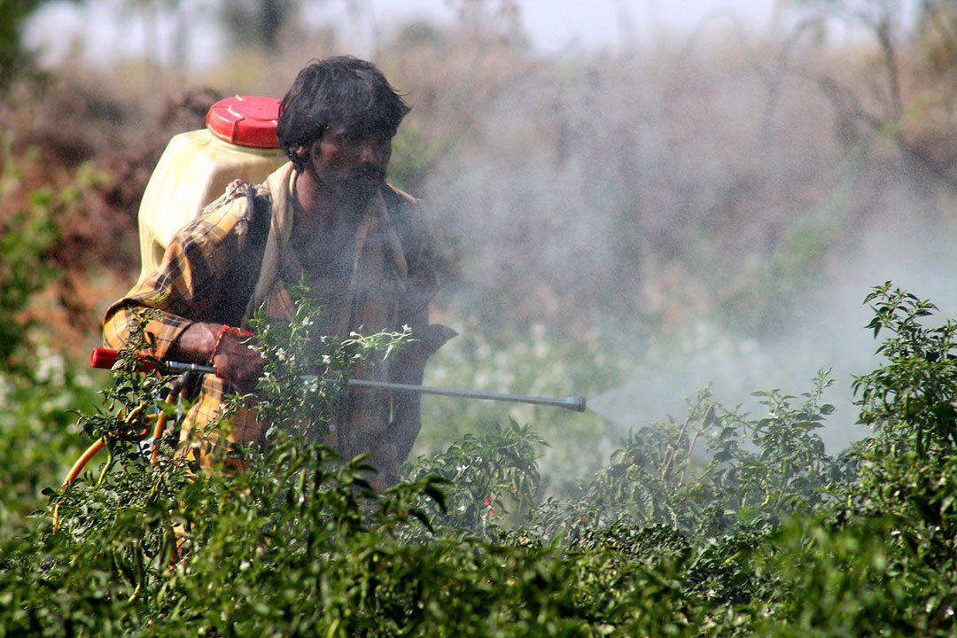 Indian scientists develop gel to protect farmers from pesticide toxicity