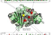 In this structural model for a beta-lactamase protein, catalytic residues are shown as spheres with those that are consistently highly frustrated along the entire beta-lactamase family shown in red and those for which the frustrated state is not conserved in yellow. The new work by scientists at Rice University, the University of Buenos Aires and the European Molecular Biology Laboratory suggests these enzymes, which must remain exposed to react with their targets, get a measure of protection from the somewhat-frustrated amino acids around them. The green lines represent minimal frustration, the red lines represent high frustration. The linear charts at top and bottom show the positions of the relevant amino acids on the protein chain and a measure of the conservation of energy over the entire beta-lactamases protein family. Illustration by Maria Feiberger