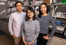 Materials science and engineering professor Qian Chen, center, and graduate students Binbin Luo, left, and Ahyoung Kim find inspiration in biology to help investigate how order emerges from self-assembling building blocks of varying size and shape. Photo by L. Brian Stauffer