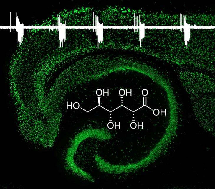 A new drug that inhibits neonatal seizures