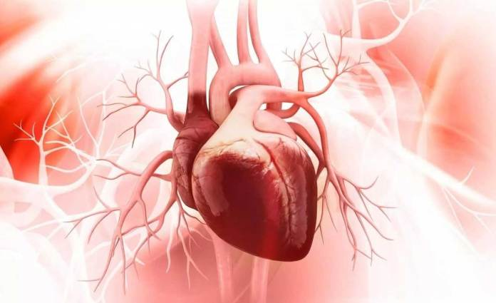 How does heart failure develop in people with chronic kidney disease?