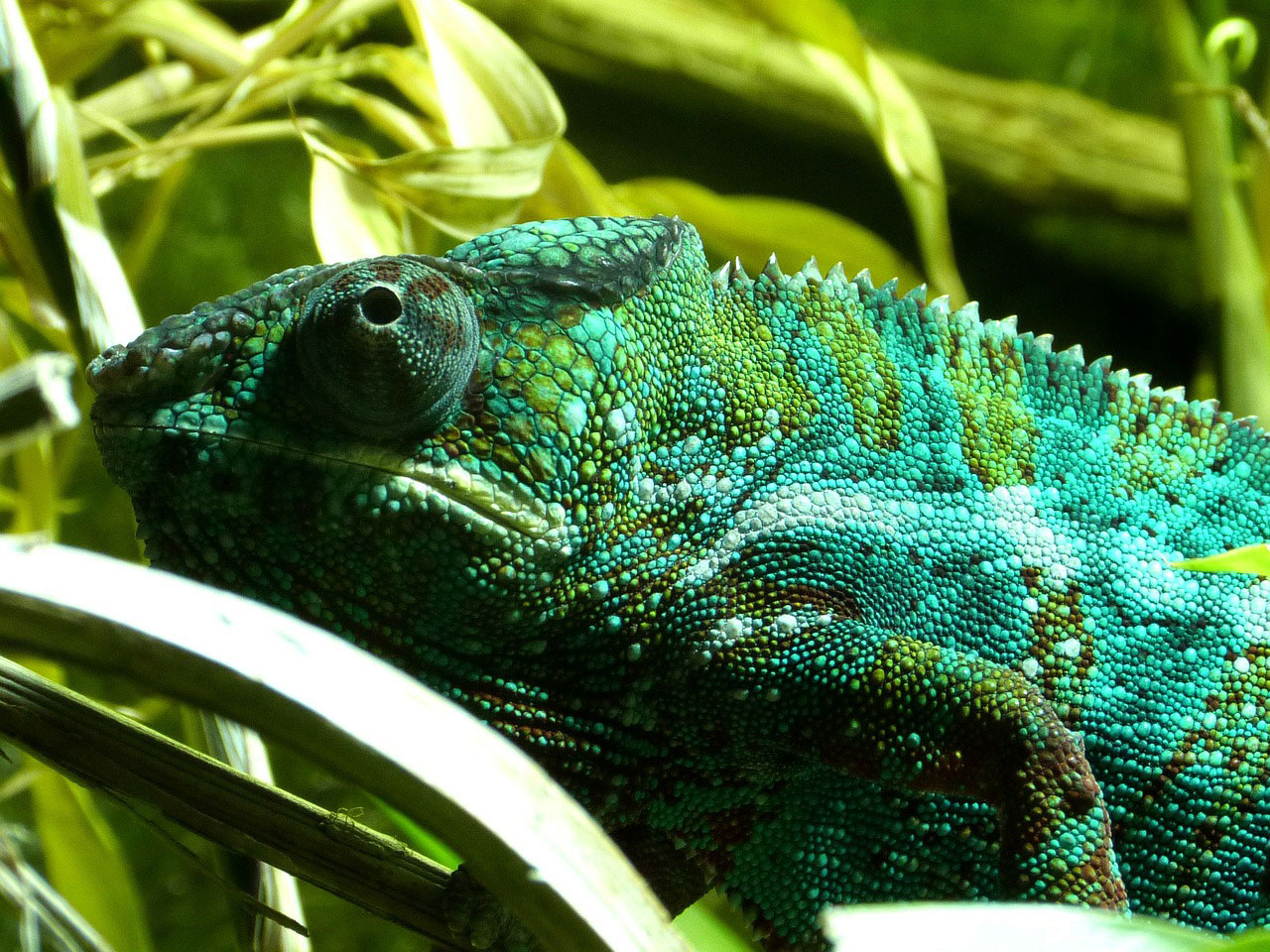New artificial chameleon skin changes color when exposed to light