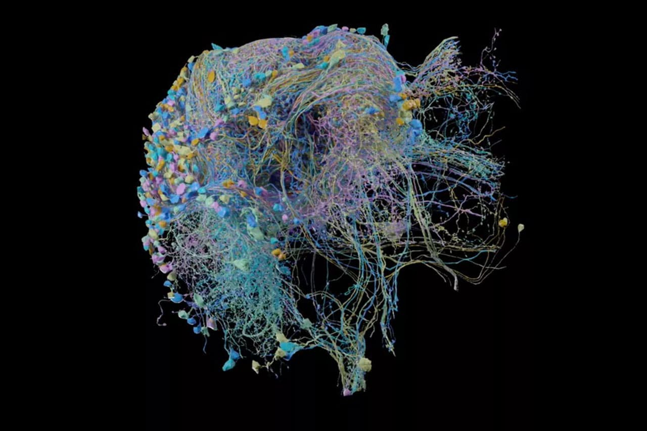 Google publishes the largest synapse-resolution map of brain connectivity