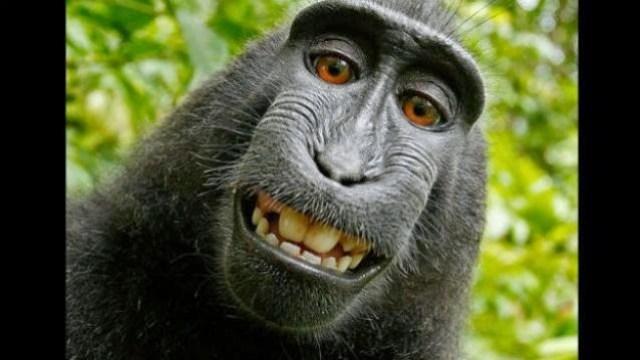 Monkey_NEW-624x351