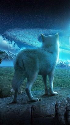 wold wallpaper