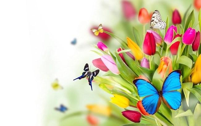 Desktop backgroud and wallpaer for flowers