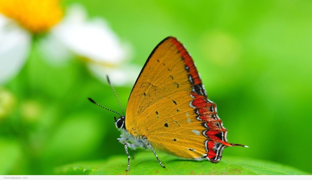 gree butterfly nature free computer background