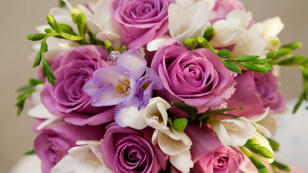 Beautiful rose flower in pink image wallpaper