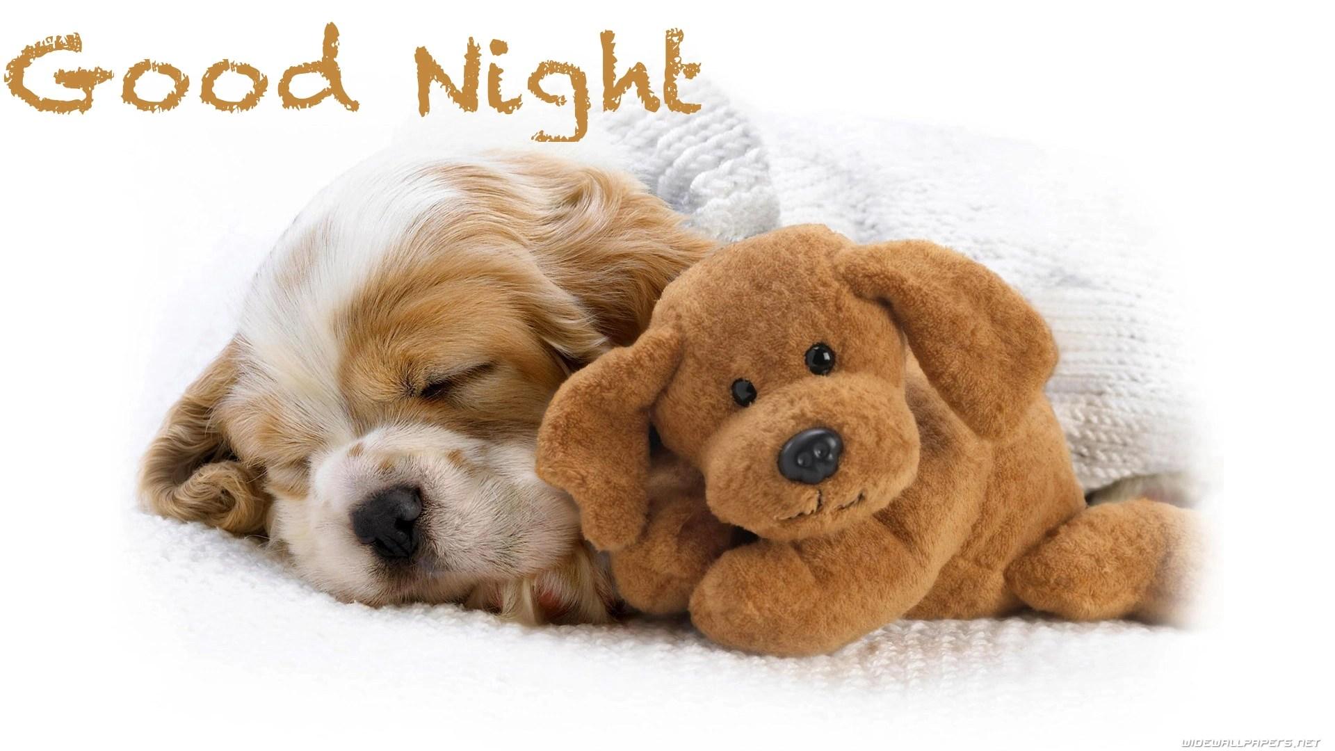 Good night dog image