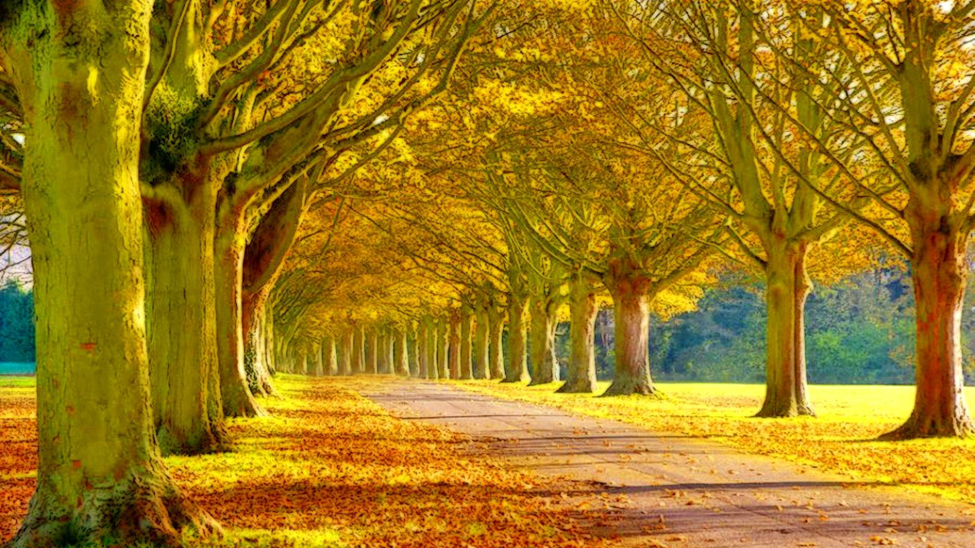 Nice road nature wallpaper